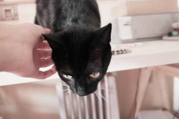 black cat, home, room, desk organization, decor, girls room, cute decoration, laduree home, make up organization tour